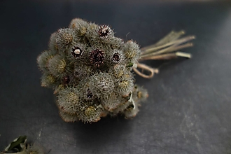 Iný materiál - kvety lopúcha- kytička pre aranžérov - 12462160_