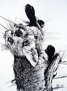 Kresby - INKtober - day2 Fox - tlač A4, A3 - 12467877_