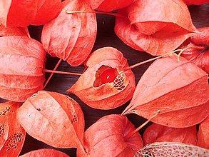 Suroviny - Plody mochyne - 12497729_
