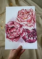 Obrazy - Pivónie - Akvarel (ArtPrint) - 12506955_