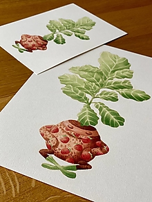 Grafika - Fikus vo svetríku - Print | Botanická ilustrácia - 12517210_
