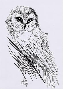 Kresby - INKtober - day7 White owl - tlač A4, A3 - 12515830_