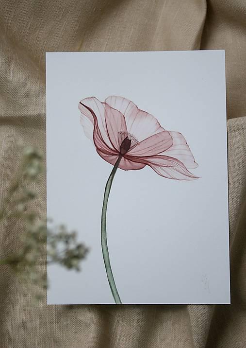 Obrazy - priesvitné kvety- akvarel- originál  - 12522580_