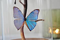 Dekorácie - Motýle v sklenenej kupole - 12560888_