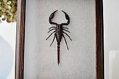 Obrázky - Škorpión v drevenom rámčeku - 12561016_