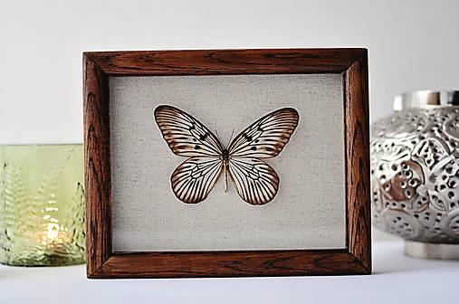 Idea idea- motýľ v rámčeku