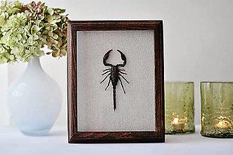 Obrázky - Škorpión v drevenom rámčeku - 12561015_