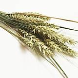 Dekorácie - pšenica - 12565008_