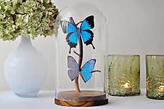Dekorácie - Papilio ulysses/ Morpho aega- motýle v sklenenej kupole - 12586424_