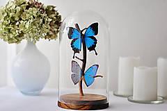 Dekorácie - Papilio ulysses/ Morpho aega- motýle v sklenenej kupole - 12586450_
