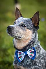 Pre zvieratká - Motýlik pre psíka FOLK - 12609635_