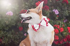 Pre zvieratká - Motýlik pre psíka DOTS - 12609714_