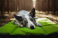 Pre zvieratká - Univerzálna vodeodolná podložka pre psa - 12636864_