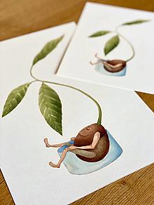 Grafika - Pán Avokádo a jeho osobný rast - Print | Botanická ilustrácia (A5) - 12653923_