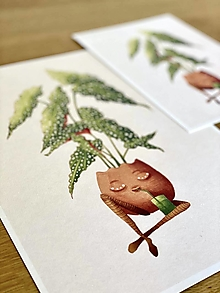 Grafika - Smädná begónia - Print | Botanická ilustrácia (A4) - 12656016_