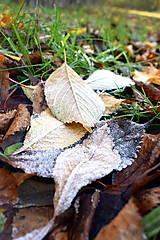 Fotografie - Jesenná rozprávka - 12676728_