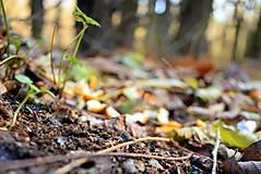Fotografie - Jesenná rozprávka II. - 12676743_