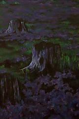 Obrazy - Levanduľová lúka uprostred lesa - Originál Maľba - 12684756_