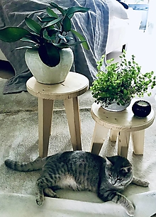 """Nábytok - Dvojset drevenych stojanov na rastliny z kolekcie """"Olaf"""" - 12689380_"""