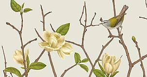 Grafika - TENNESSEE WARBLER ON TWIG WITH MAGNOLIA 2 - 12720721_
