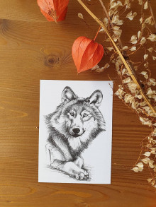 Papiernictvo - Pohľadnica -Vlk - 12724111_