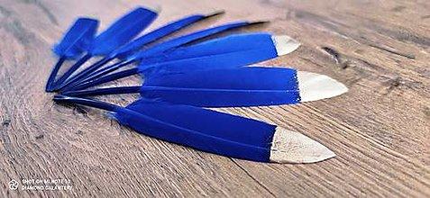 Galantéria - Dekoračné pierka modro zlaté (Modrá) - 12770582_