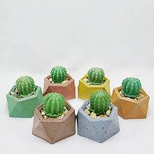 Dekorácie - Dekorácia s betónovým kaktusom Hexagon Color - 12804521_