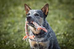 Pre zvieratká - Fleecová hračka - 12807708_