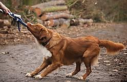 Pre zvieratká - Fleecové preťahovadlo - 12807746_