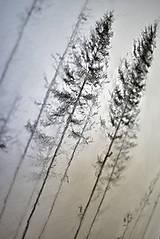 Kresby - V hmlách  - 12808180_