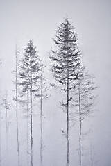 Kresby - V hmlách  - 12808181_