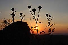 Fotografie - Kvety (Západ slnka) - 12838757_