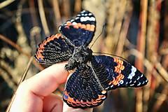 Odznaky/Brošne - Motýľ  - 12864573_