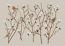 - SPARROW ON COTTON PLANT - 12865846_
