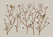 Obrazy - SPARROW ON COTTON PLANT - 12865846_