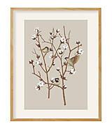 Grafika - SPARROW ON COTTON PLANT 2 - 12886597_