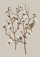 Grafika - SPARROW ON COTTON PLANT 2 - 12886598_
