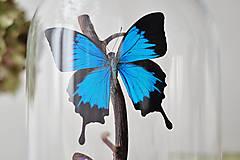 Dekorácie - Motýle v sklenenej kupole - 12893783_