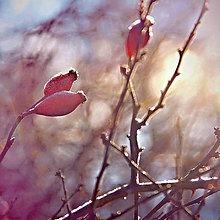 Fotografie - Šípky v zime - 12895814_