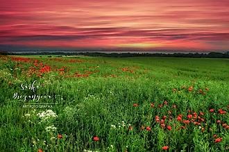 Obrazy - MAKOVÉ POLE fotoplátno 60x40 cm - 12905035_
