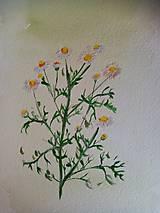 Kresby - Akvarel - Harmanček - 12912192_