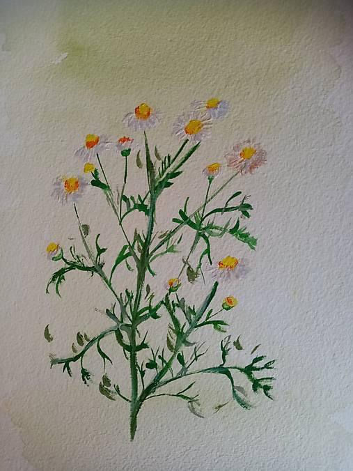 Akvarel - Harmanček