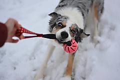 Pre zvieratká - Vanilkový aport červený - Dots - 6cm - 12953994_