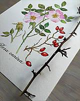 - Obraz Ruža šípová - 13004713_