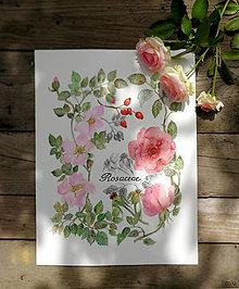 Obrazy - Obraz Rosaceae (Ružovité) - 13000784_