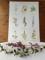 Obrazy - Plagát : Záhradné rastlinky - 13007725_