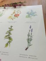 Obrazy - Plagát : Záhradné rastlinky - 13007732_