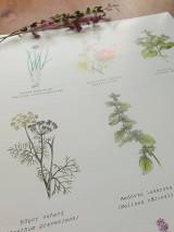 Obrazy - Plagát : Záhradné rastlinky - 13007734_
