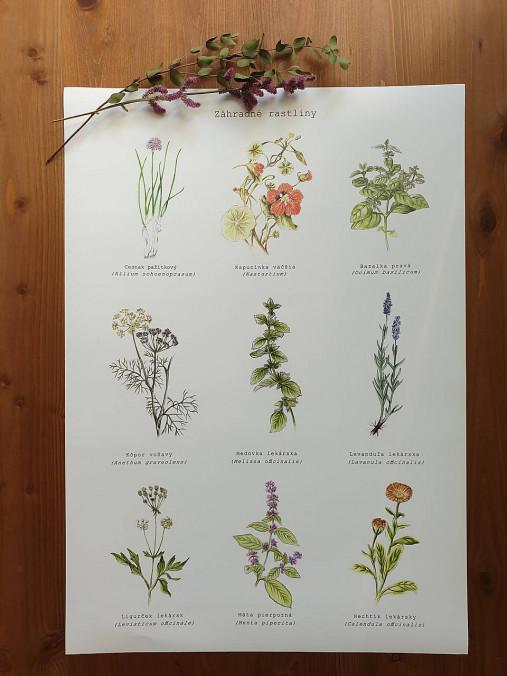 Plagát : Záhradné rastlinky