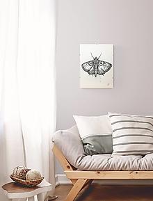 Obrazy - kresba Nočný motýľ - 13005371_